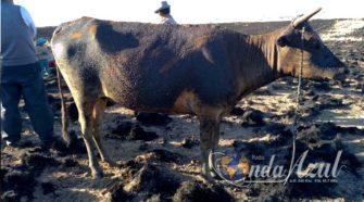 Incendio forestal Vaca Quemada, Calcinada