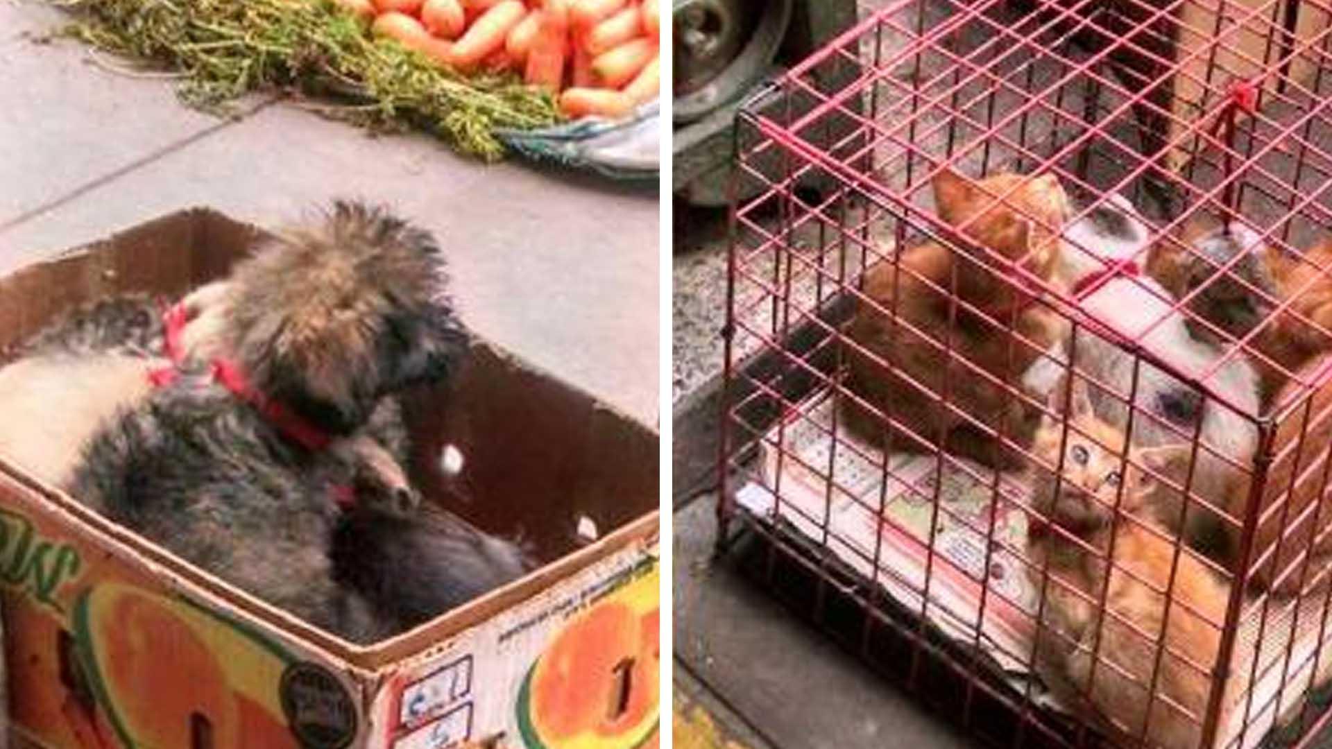 Asociaciones animalistas piden erradicar la venta de animales en la feria sabatina