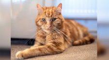 Un gato se escapa de la casa de su nueva familia y recorre 64 kilómetros