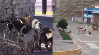 Esterilización de perros y gatos callejeros