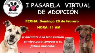Adopción de perritos y gatitos