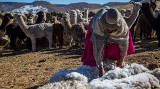 Libra de fibra de alpaca