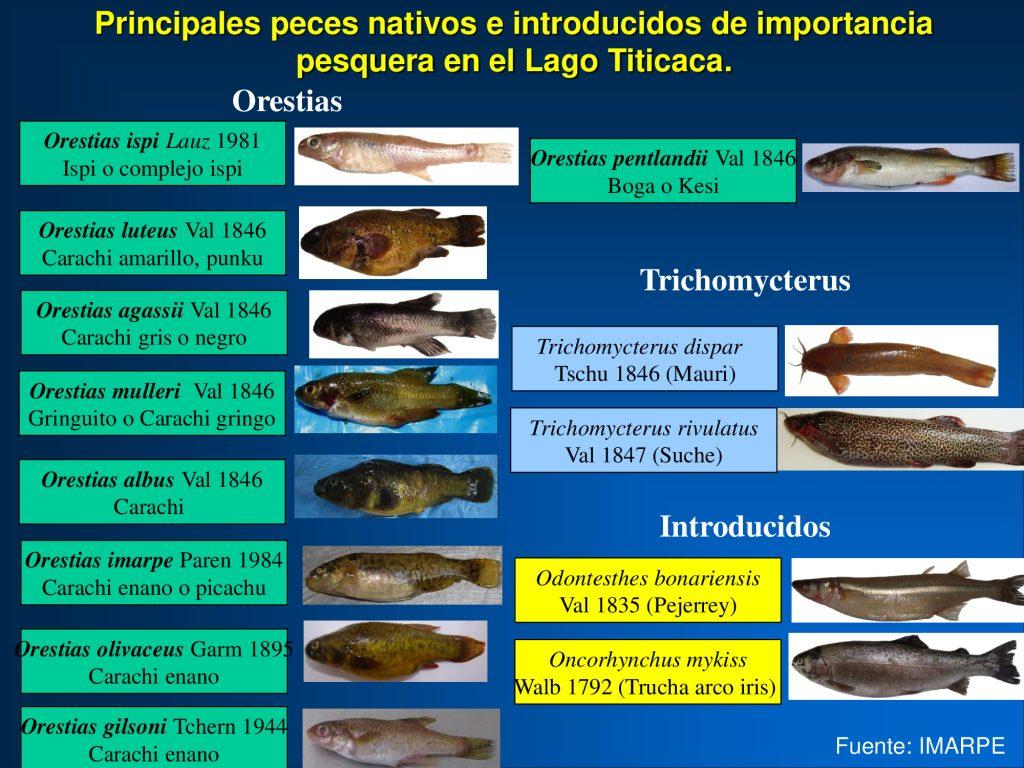 Principales peces nativos