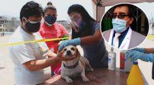 Campaña de dosificación de gastos y perros